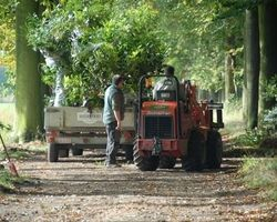 Sherwood & Co - végétaux - plantations