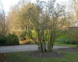 Sherwood & Co - végétaux - arbres et arbustes